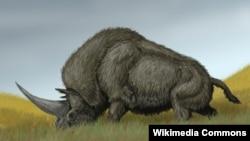 Rinoqeronti siberian (Elasmotherium sibericum)