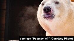 """Белый медведь в зоопарке """"Роев ручей"""" в Красноярске"""