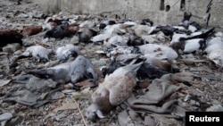 Голубів, як стверджують повстанці, теж убив хімічний удар урядових військ Сирії у передмісті Дамаска Арбіні, фото 24 серпня 2013 року