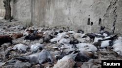 Мёртвыя галубы ў прымесьці Дамаска, у якім, паводле апазыцыі, урад ужыў хімічную зброю