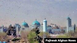 Город Мазари-Шариф