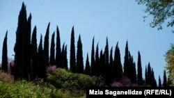 თბილისის ბოტანიკური ბაღი