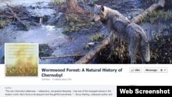 یکی از عکس های سرگی گاشاک، منبع:http://www.facebook.com/Chernobyl.Wormwood