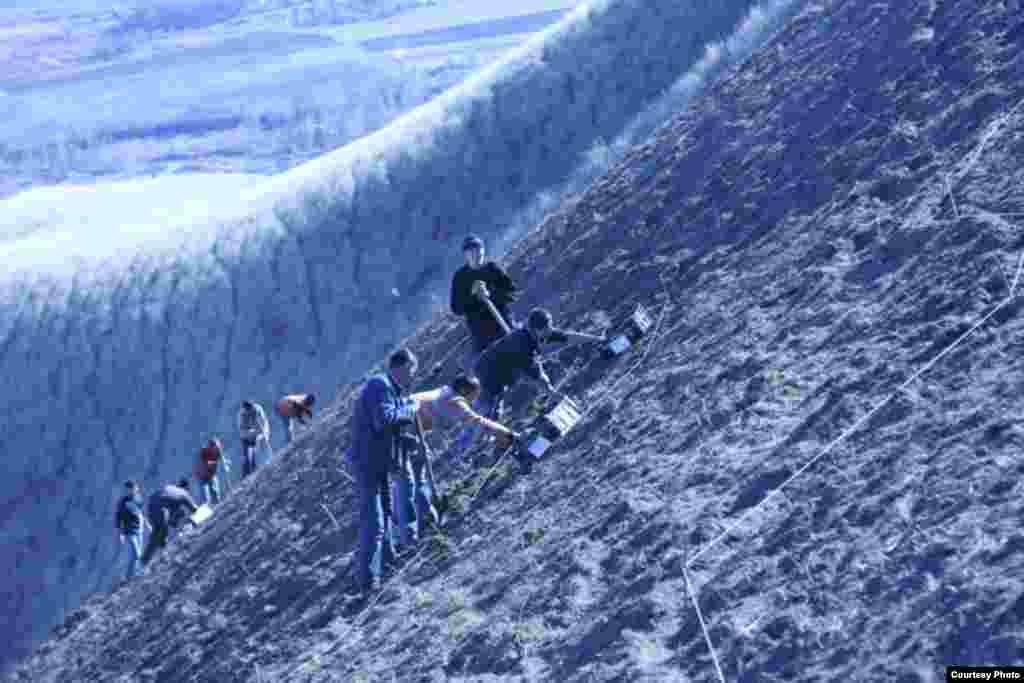 Ала-Тоодо гүлдөгөн Голландия жоогазындары - Жоогазындарды тигүү үчүн Бишкектин өйдө жагындагы Байтиктин Боз-Бөлтөгүндөгү тоо этеги тандалып алынды