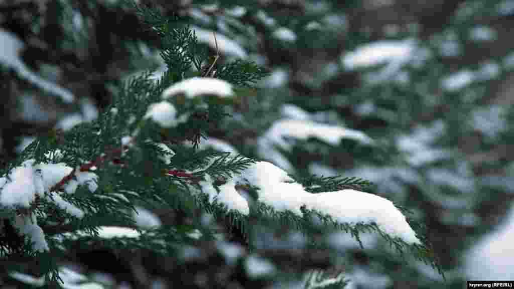 Зимняя непогода в Симферополе