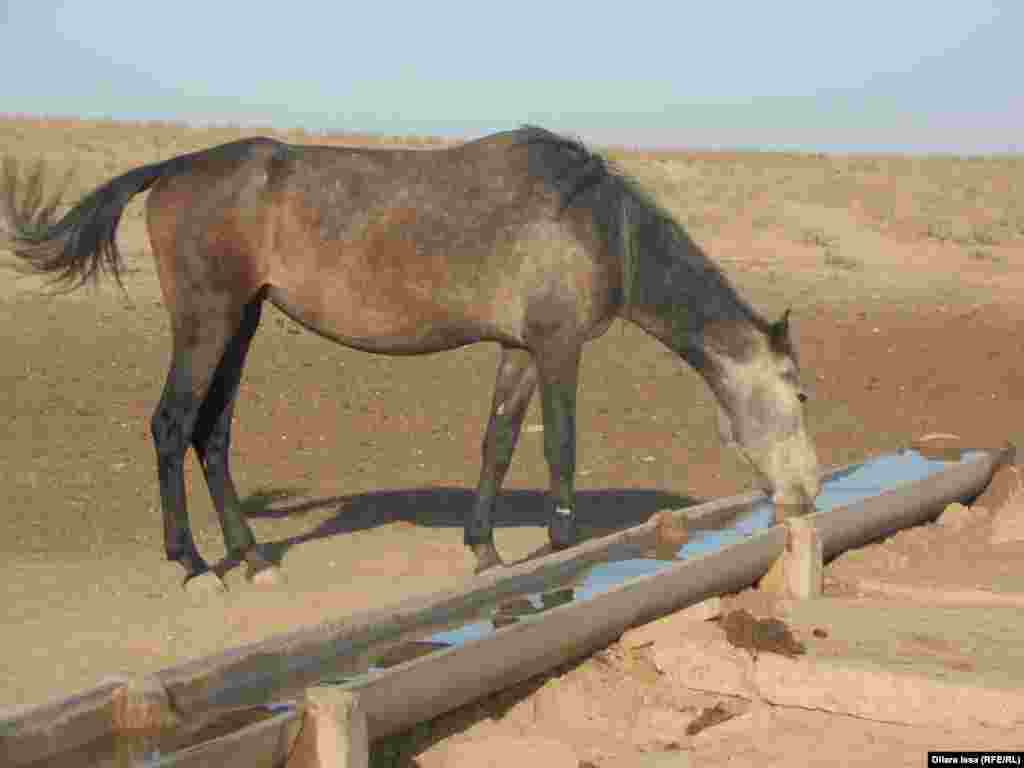 Лошадь на водопое рядом с колодцем.