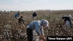 145/5000 Недавние жалобы сотен граждан по всей стране указывают на то, что в хлопковом секторе Узбекистана продолжается принудительный труд. (файл фото)