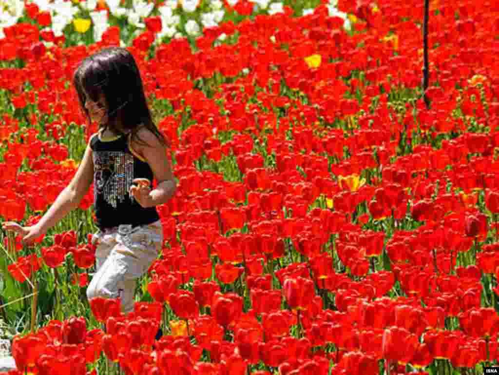 Іран. Фэстываль цюльпанаў у Тэгеране.