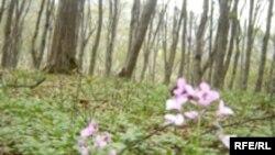 Невыгодный для промышленности экспорт круглого леса связан с риском передела собственности в России