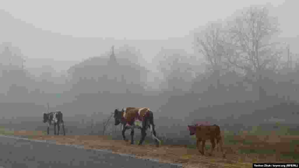 В тумане вдоль дороги в Байдарской долине на пастбище бредет стадо коров