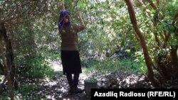 Azerbaijan, a woman collecting Feyhoa, Astara district 4 OKT 2019