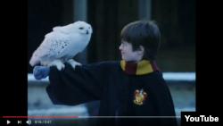 Harry Potter și bufnița lui, Hedwig