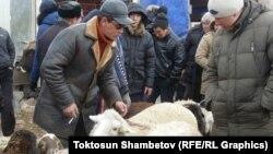 Бажы биримдигинин айрым инспекторлору Кыргызстандагы эпизоотиялык абалды текшерет. Ат-Башынын мал базары. 2014-жыл.