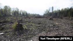 Не так давно здесь был лес