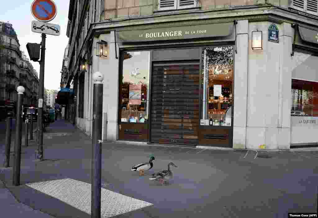 Ducks waddle through empty streets in Paris on April 14.
