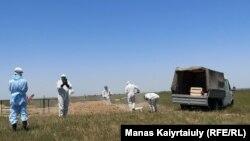 Коронавирустан қайтыс болғандардың зираты. Алматы облысы, Қараой ауылы маңы. 25 мамыр 2020 жыл.