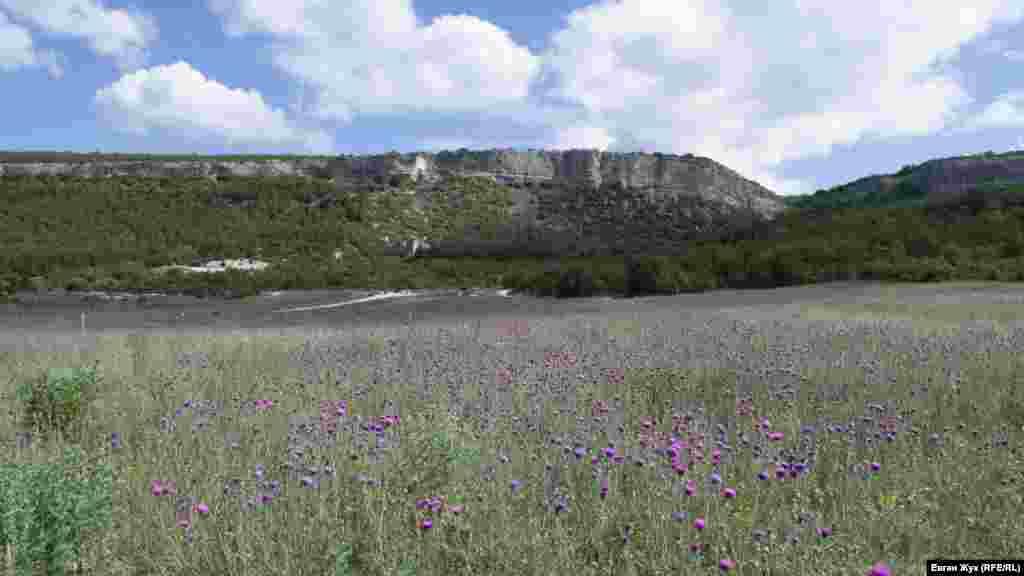 Рядом с маковым полем расположено поле чертополоха