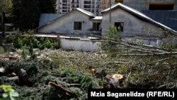 В прокуратуре начато следствие по факту вырубки деревьев в центре Тбилиси по статье, которая подразумевает незаконную вырубку деревьев, повлекшую значительный ущерб