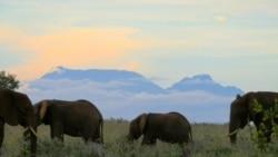 Elman Yusifov: 'Orda safari tipli əyləncə mərkəzi salmaq yaxşı ideyadır'