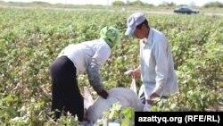 Kazakhstan - migrant workers from Uzbekistan picking cotton in the Yessentayev village. South Kazakhstan region Maktaral district, 20SEP2016.