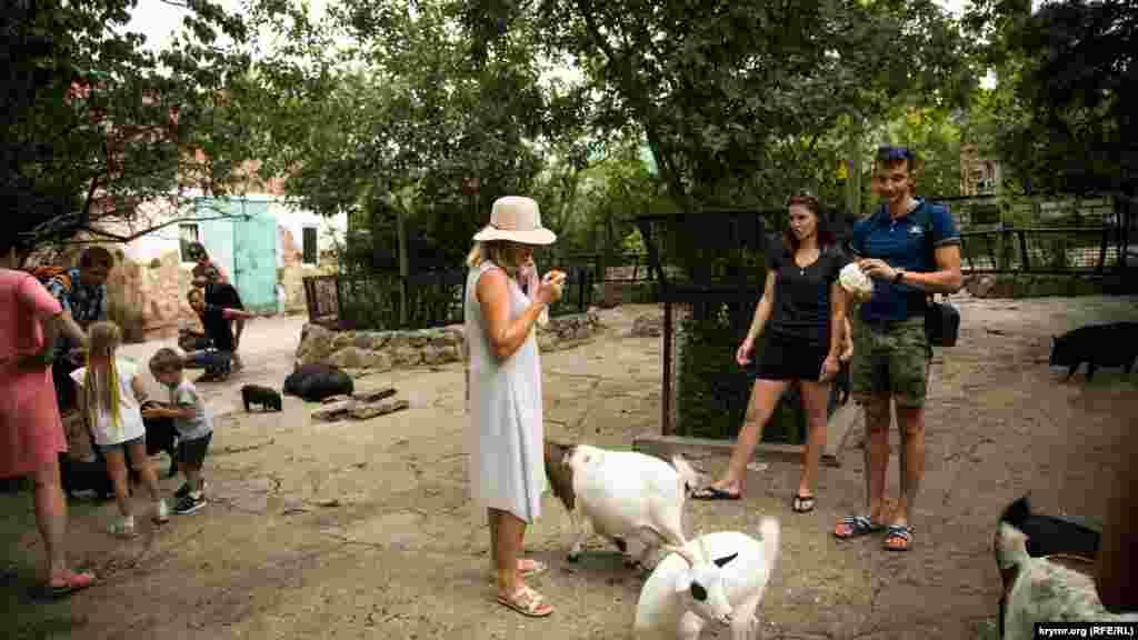 Посетителей пускают к домашнему скоту