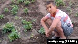 Марқұм Қуаныш Әлімжановтың екінші ұлы Аслан. Ақтөбе облысы, Шұбарши кенті, 14 мамыр 2012 жыл.