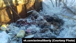 Свалка найденная зоозащитниками в Новосибирске