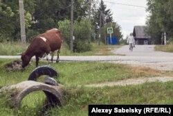 Деревня Броди в Новгородской области