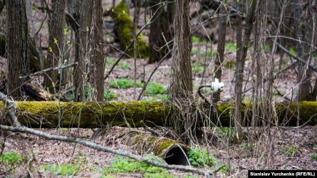 Покинуті населені пункти у Чорнобильській зоні дедалі більше схожі на звичайні лісові хащі