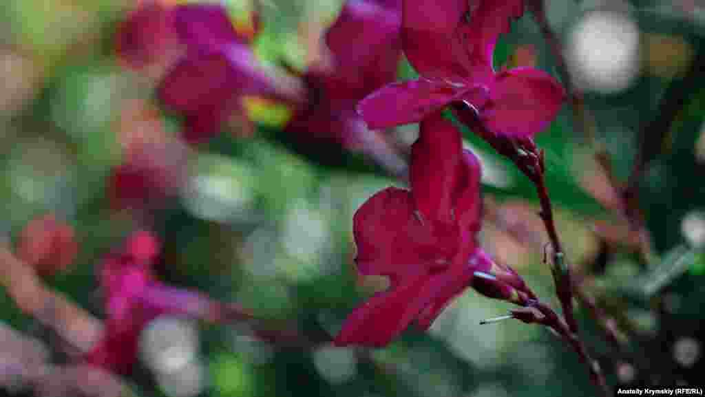 Цветы парка