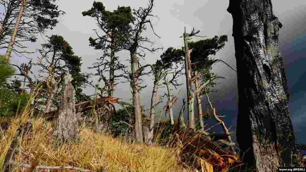 В большинстве случаев причиной лесных пожаров, как свидетельствует статистика, становится деятельность человека. Это может быть случайное распространение огня от туристических костров, при намеренном сжигании растительности, а также злой умысел. Естественные лесные пожары обычно возникают из-за удара молнии