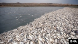Dva miliona riba uginulo je zbog zagađenja u blizini Teherana, april 2014.