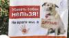"""Плакаты митинга """"Стерилизации – ДА! Убийству – НЕТ!"""""""