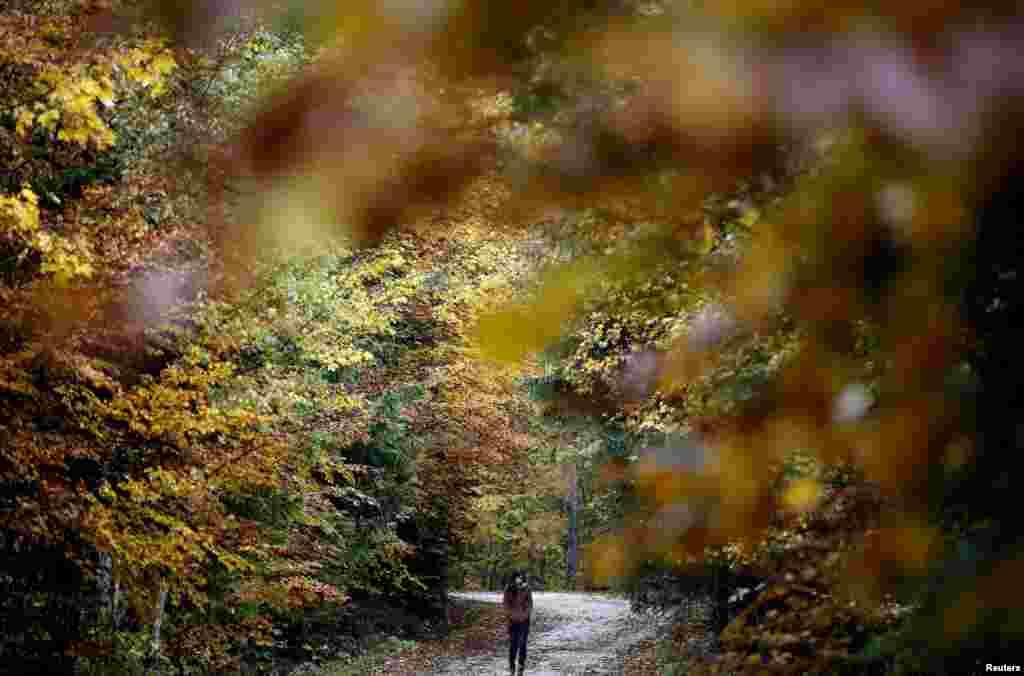 Прогулка по осеннему лесу на юго-востоке Боснии-Герцеговины