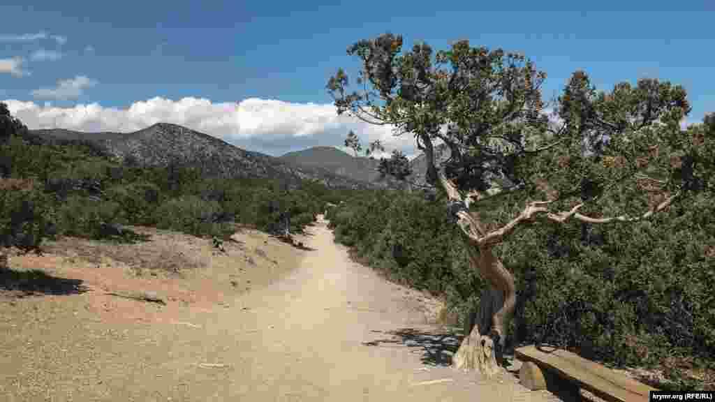 Можжевеловая роща – самая большая в Европе. Через нее проходит Голицинская тропа – одна из главных достопримечательностей Нового Света Как Голицинская тропа выглядит в разгар весны, смотрите в фотогалерее
