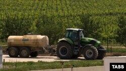 Виноградники кримської компанії «Alma Valley»