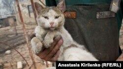 Кошка, спасенная на пожаре (архивное фото)