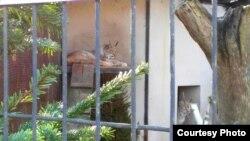 Фото зоопарка Калининграда