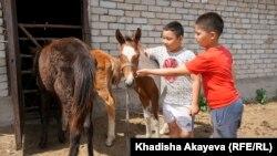 Балалар құлынды сипап тұр. Балтатарақ, Шығыс Қазақстан облысы. 9 маусым 2020 жыл.