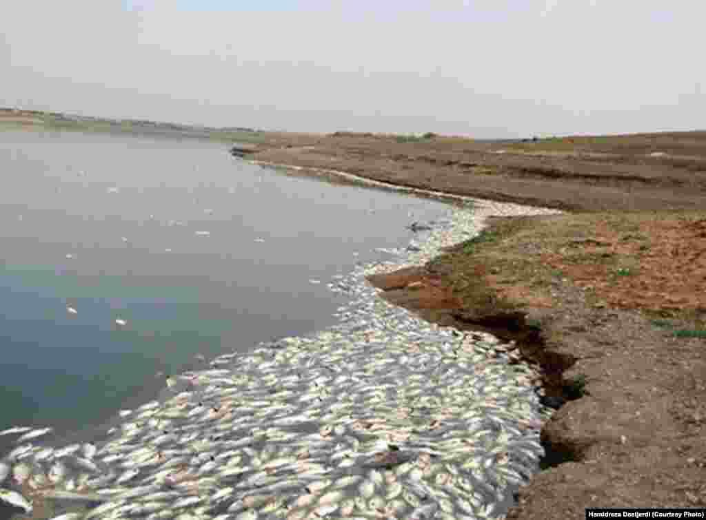 رییس اداره محیط زیست شهرستان ری گفته از فرمانداری اسلامشهر و سایر مسئولان مربوطه به دلیل اهمال در جلوگیری از این آلودگی در سد شکایت قضایی خواهد کرد