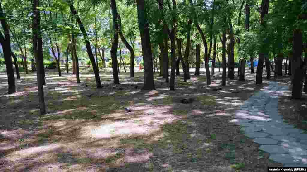 Сухостій у Комсомольському парку. Зазвичай таке спостерігається тільки в другій половині літа