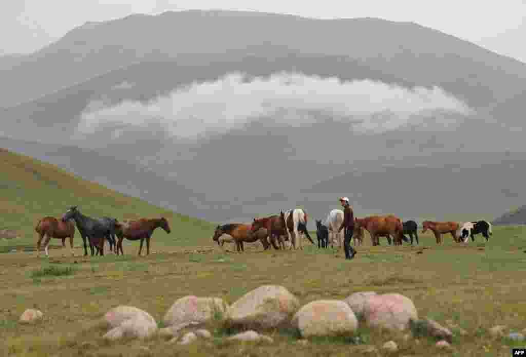 A Kyrgyz herdsman grazes horses on a pasture of the Suu-Samyr plateau, 2,500 meters above sea level, along the ancient Silk Road from Bishkek to Osh. (AFP/Vyacheslav Oseledko)