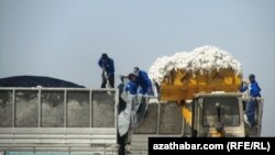 Pagta hasyly ýygnalýar, Türkmenistan