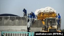 Сбор хлопка, Туркменистан
