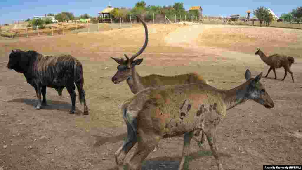 На території парку площею 4 гектари живуть кілька десятків парнокопитних тварин, а також страуси, батьківщиною яких вважається Латинська Америка, Африка і Південно-Східна Азія