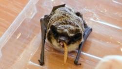 The Bat's Out Of The Fridge: Belarusian Rescuers Help Wildlife Hibernate