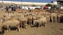Курбан-байрам в Махачкале: в первый день в жертву принесли тысячи баранов