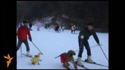 На лижі з домашніми улюбленцями