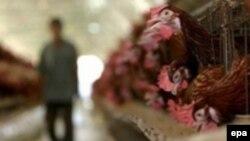 Россия отказалась от украинских продуктов животноводства с 20 января