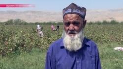Новые технологии или госдотации? Как Таджикистан пытается поддержать хлопковую индустрию